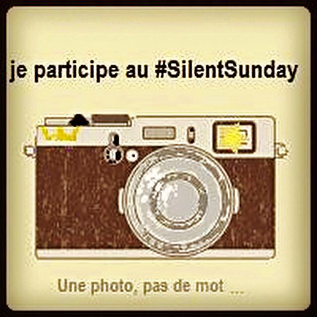 Silent Sunday 39 #un air de vacances