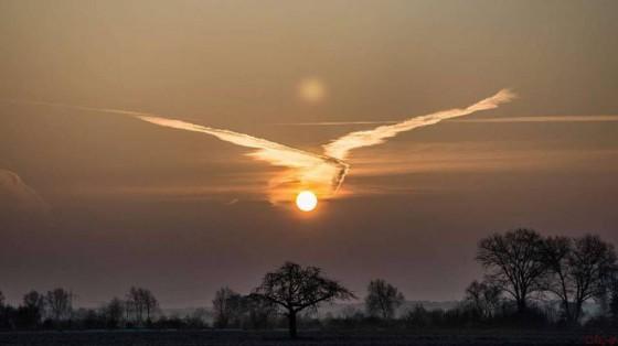 Coucher de soleil - oiseau