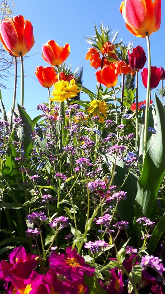 Fleurs de printemps - Silent Sunday 65 - Egalimère